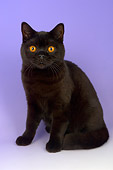 CAT 02 AL0043 01