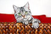 CAT 02 BK0002 01