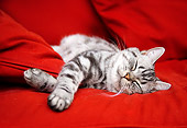 CAT 02 BK0009 01