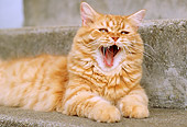 CAT 02 GR0062 01