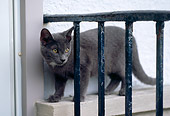 CAT 02 GR0070 01