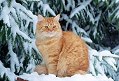 CAT 02 GR0076 01