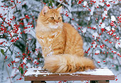 CAT 02 GR0077 01