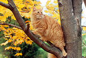 CAT 02 GR0079 01