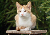 CAT 02 GR0085 01