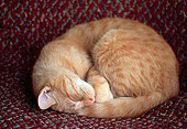 CAT 02 GR0086 01