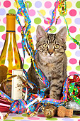 CAT 02 JD0013 01