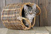 CAT 02 JD0016 01