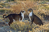 CAT 02 KH0074 01