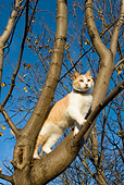 CAT 02 KH0080 01