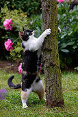 CAT 02 KH0082 01
