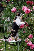 CAT 02 KH0083 01