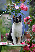 CAT 02 KH0084 01