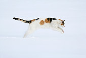 CAT 02 KH0086 01