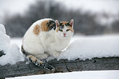 CAT 02 KH0087 01