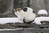 CAT 02 KH0088 01