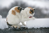 CAT 02 KH0089 01