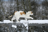 CAT 02 KH0090 01