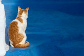 CAT 02 KH0093 01