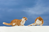 CAT 02 KH0094 01