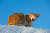 CAT 02 KH0095 01