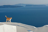 CAT 02 KH0099 01