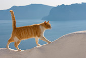 CAT 02 KH0100 01