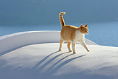 CAT 02 KH0105 01