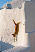 CAT 02 KH0106 01