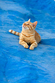 CAT 02 KH0108 01