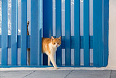 CAT 02 KH0109 01