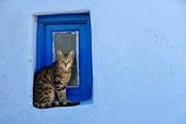 CAT 02 KH0112 01