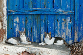 CAT 02 KH0130 01