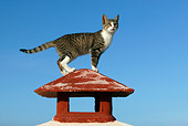 CAT 02 KH0134 01
