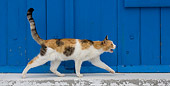 CAT 02 KH0143 01