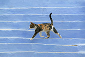 CAT 02 KH0146 01