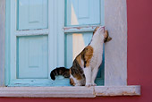CAT 02 KH0149 01