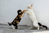 CAT 02 KH0155 01