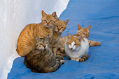 CAT 02 KH0156 01