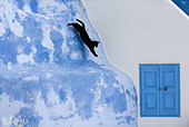 CAT 02 KH0161 01