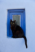 CAT 02 KH0165 01