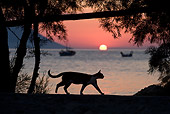 CAT 02 KH0174 01