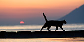 CAT 02 KH0176 01