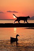CAT 02 KH0178 01