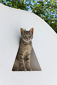 CAT 02 KH0189 01