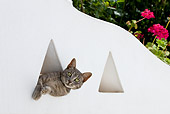 CAT 02 KH0190 01