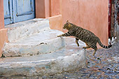 CAT 02 KH0196 01