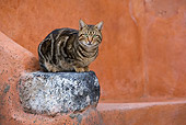 CAT 02 KH0198 01