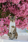 CAT 02 KH0203 01