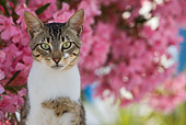 CAT 02 KH0204 01